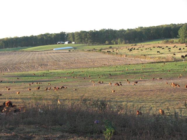 Appomattox Farm
